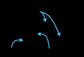 Vinkelben, vinkelbåge och vinkelspets